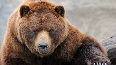 Почему медведь даже не повер…