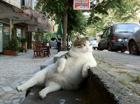 "Подборка gif анимаций с кошками ""Мяу,Мяу и точка"""