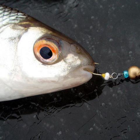 Обидные ошибки рыболовов