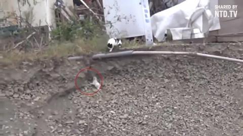 Невероятное спасение щенка кошкой!