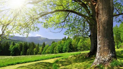 Целебная сила дерева. Как де…