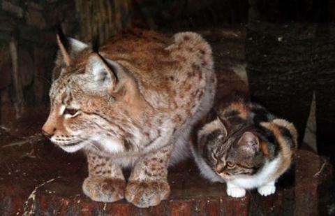 Кошка забрела в зоопарк и на…
