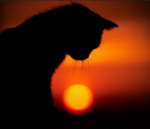 Кот пришел на похороны своей…