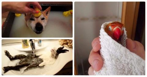 25 умилительных домашних животных, которые обожают принимать ванну (9 фото + 16 гиф)