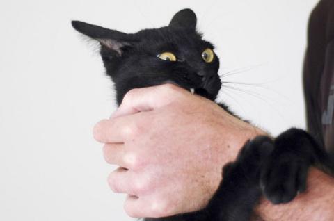 Кот устроил хозяину веселое …