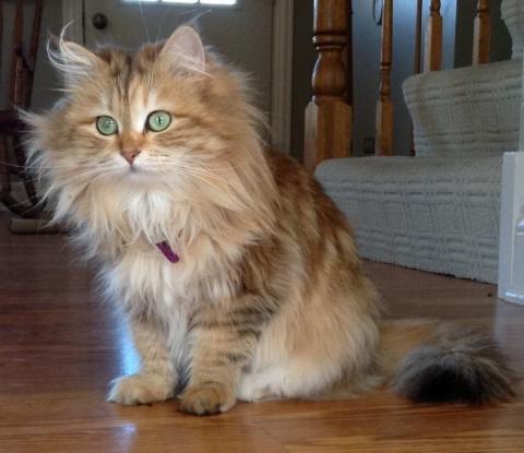 Кошка-принцесса по имени Амб…