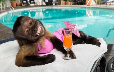 Обезьяны, деньги и проституция. Ученые обнаружили, что деньги меняют даже обезьян.