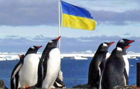 Защебечут ли пингвины «Щэнэвмэрлу»?