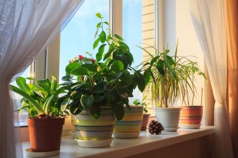 Эпин – не панацея для комнатных растений