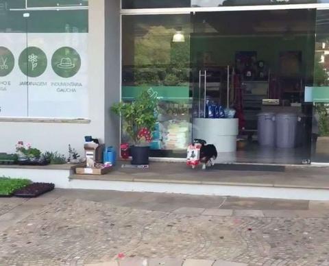 Бразильский пёс самостоятельно ходит за покупками