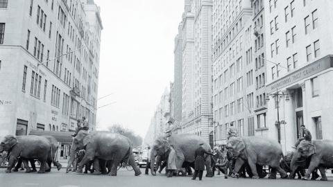 Закрывается старейший в США цирк на радость всех защитников животных