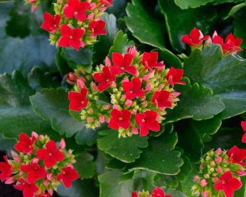 10 растений, которые помогут создать в доме идеальный микроклимат