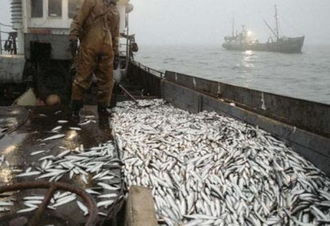 Крах украинского рыбного про…