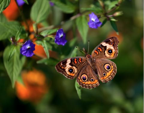 Как привлечь бабочек в свой сад, сделав его поистине волшебным