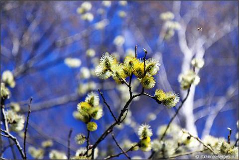А ветер пахнет всё ж весной...