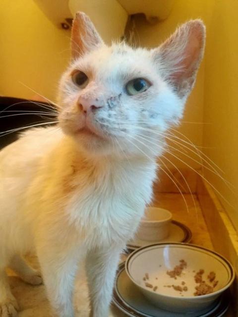 Спасенный бездомный кот удивил всех красотой своих глаз!
