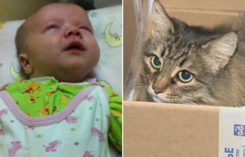 Бездомная кошка нашла ребенк…