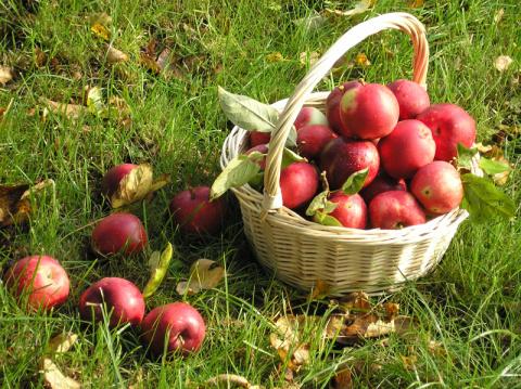 Яблочные маски для вашей кожи