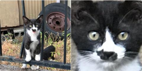 В Сети прославился котёнок с пятном на морде в виде кота