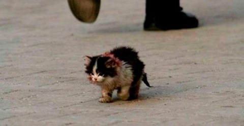Он шел по улице и тихо плакал…