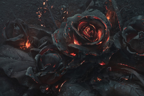 Фотограф сжигает розы ради завораживающих снимков