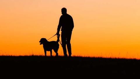 Почему потерять собаку иногда тяжелее, чем потерять друга или родственника
