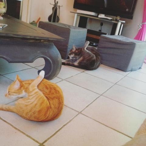 Коты, удивляющие своей синхронностью