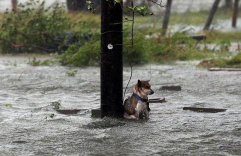 Хозяева бежали от урагана, а…