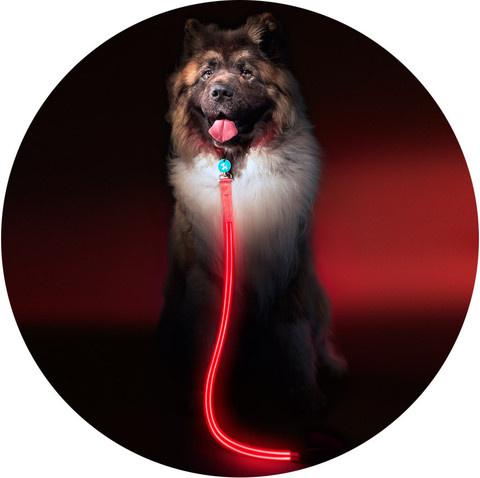Как не потерять собаку в темном-претемном парке