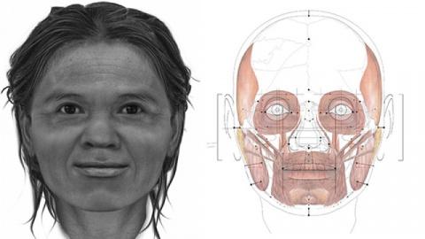 Ученые показали лицо женщины…