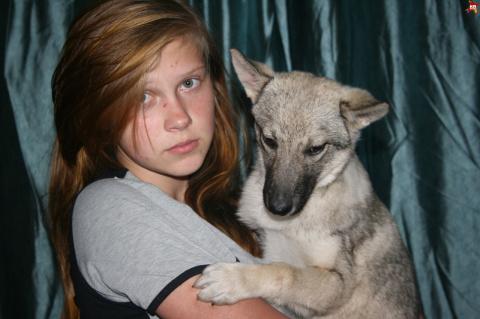 Уфимская семья поселила в своей квартире настоящую волчицу