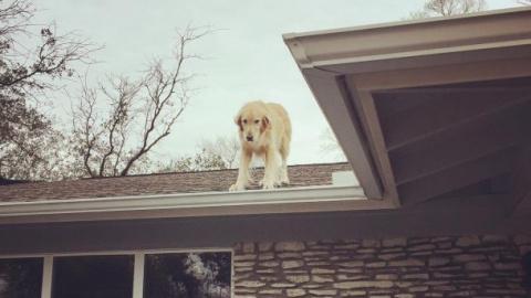 Пёс, который любит сидеть на крыше