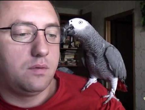 Диалог и попугаем - смешное видео