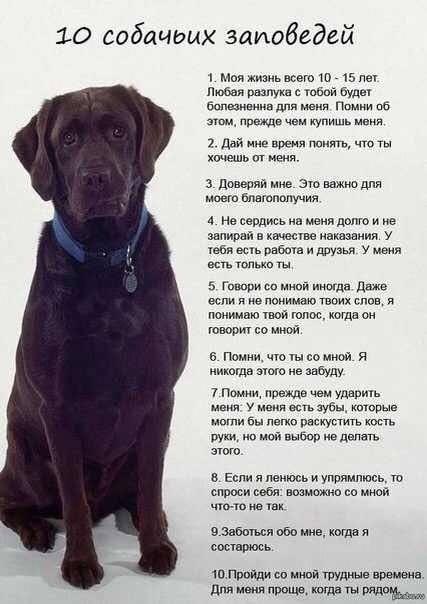 10 собачьих заповедей