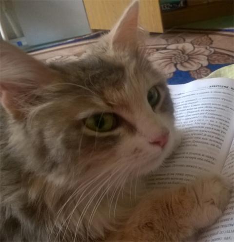 Как наш кот Тима жену себе нашел