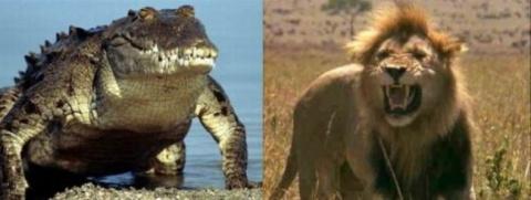 Битва аллигатора с... Ужасно…