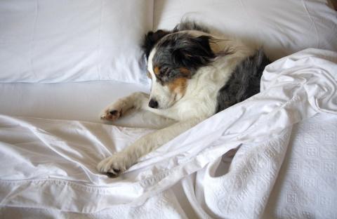 Можно ли разрешать собаке ил…