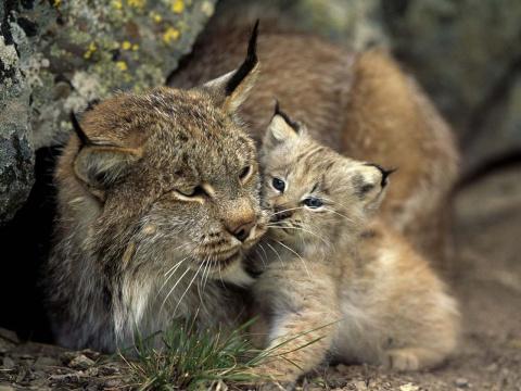 Уроки фотографии: съёмка дикой природы