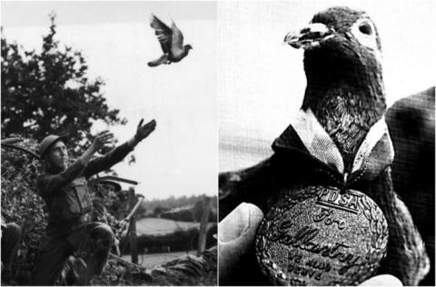 Шер Ами – почтовый голубь, к…