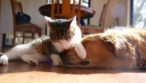 Спасенный котенок, отвергнутый собратьями, находит друга собаку.