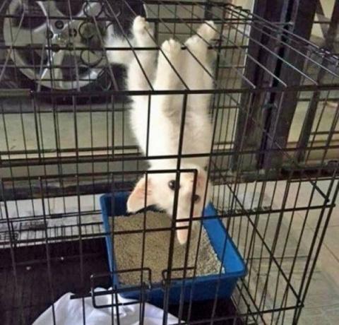 Коты — одни из самых странны…