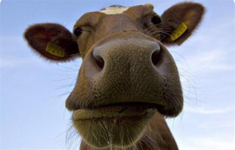 Про издержки нелюбви к животным