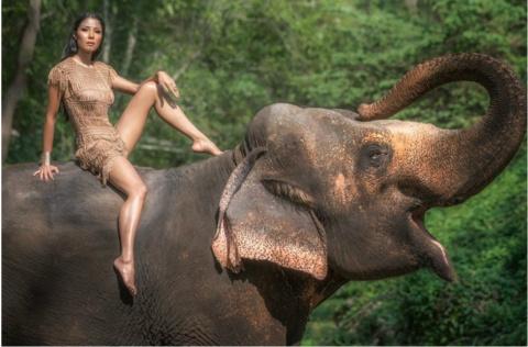 Слон — очень аккуратный звер…