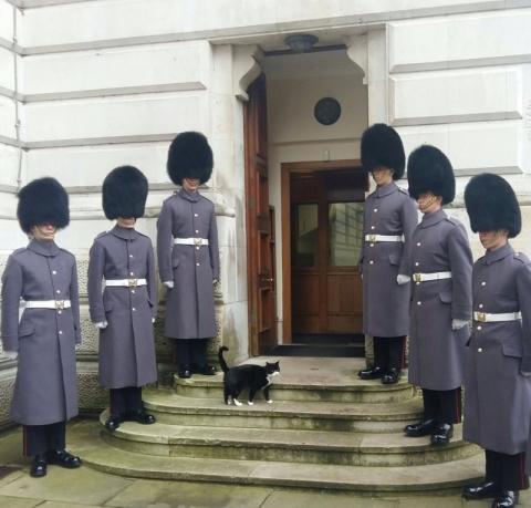 Кот из британского МИД удостоился собственного почетного караула