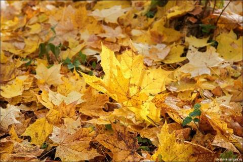 Осенняя пора - очей очарованье