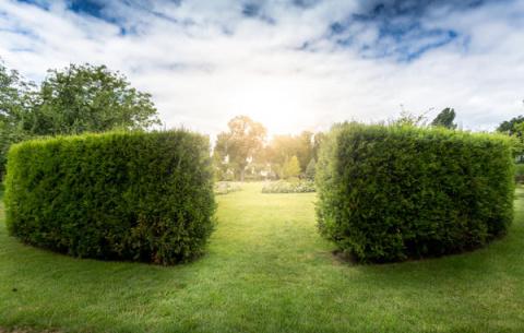 Живая изгородь: 12 образов д…