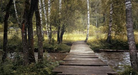 Мост для Поли