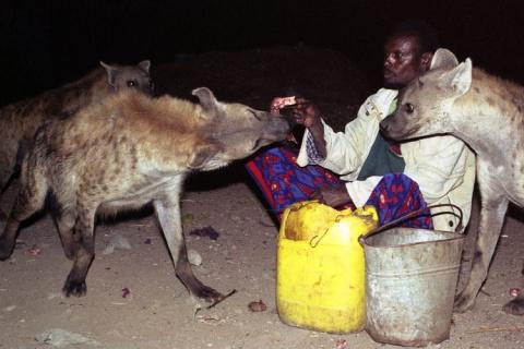 «Пастухи гиен» из Харара каж…