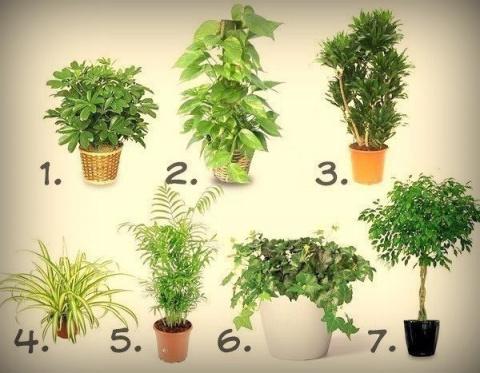 7 лучших растений для очистк…
