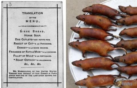 Кошки, крысы и слоны: что приходилось есть парижанам в конце XIX века